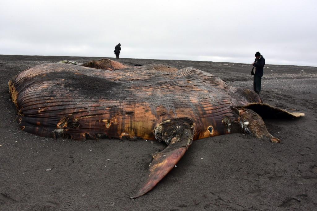 Toter Wal am Ochitskischen Meer